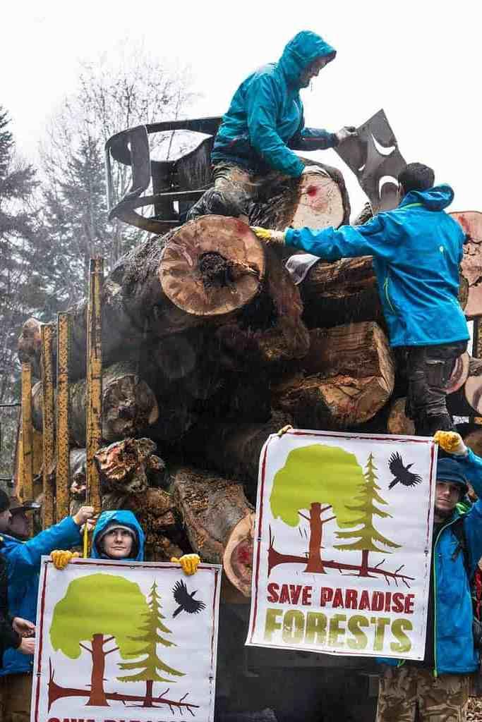 Protests against illegal logging in Romania