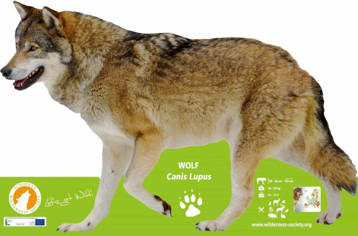 European WIlderness Society Lifesize Wolf Display