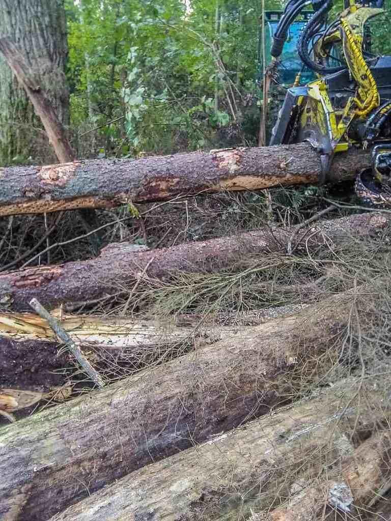 Bialowieza Logging _ Ola_Cnota