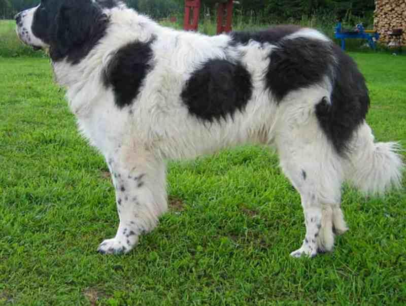 Fapas Astruais Livestock Protection-21999.jpg
