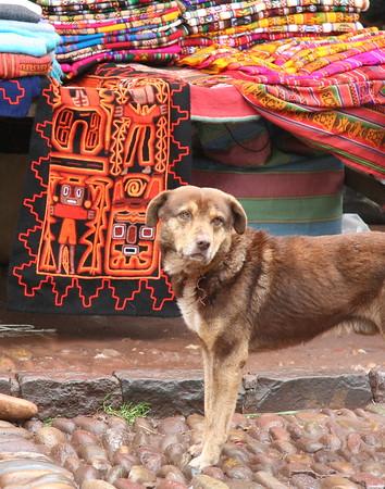 Peruvian dog, Pisac market