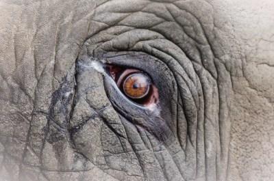 象は大きいけれど、とっても寂しがり屋