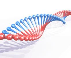 ワキガの遺伝する確率