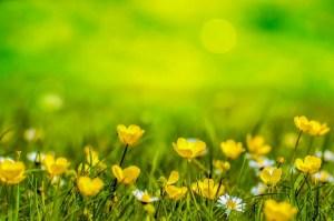 春に咲く花の写真