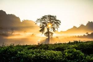 太陽と木の写真