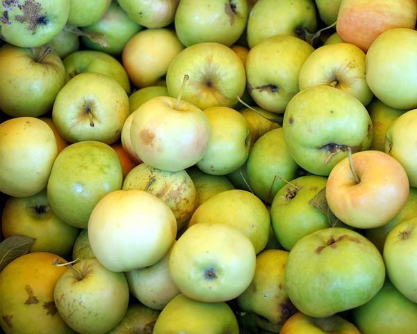 Партию кубанских яблок доставят на МКС