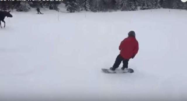 В США лось напугал сноубордистов