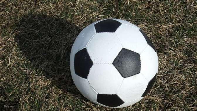 Ученые: Шмели научились играть вфутбол друг сдругом