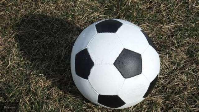 Лондонские ученые научили шмелей игре в футбол