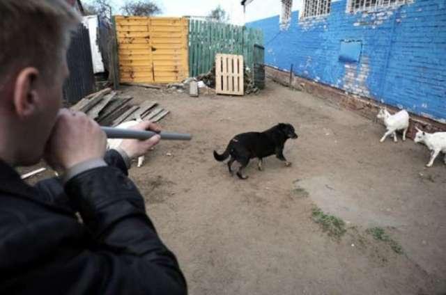 В Дагестане после гибели девочки устроили массовый отстрел собак
