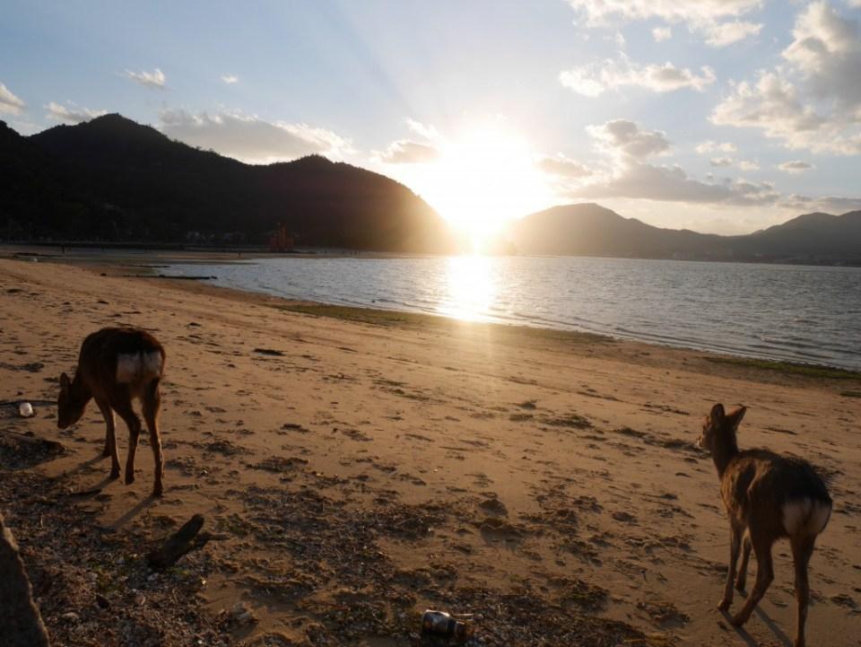 Je ne vois pas tous les jours des cerfs sur une plage