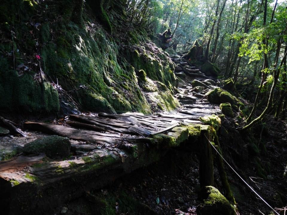 Le chemin à travers la forêt dense