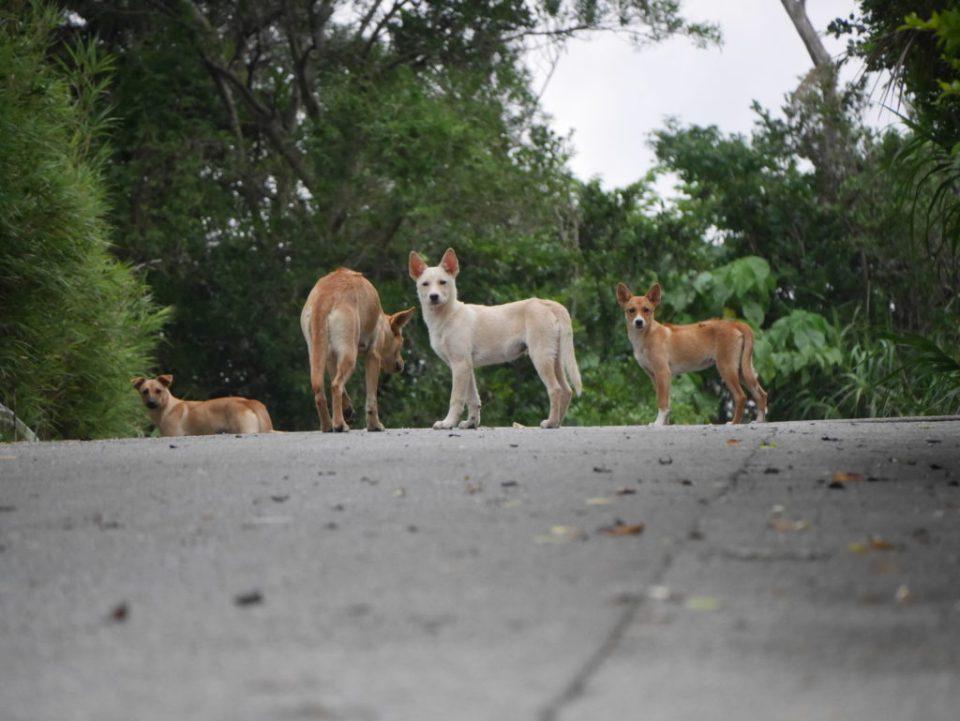 La famille de San, le chien.