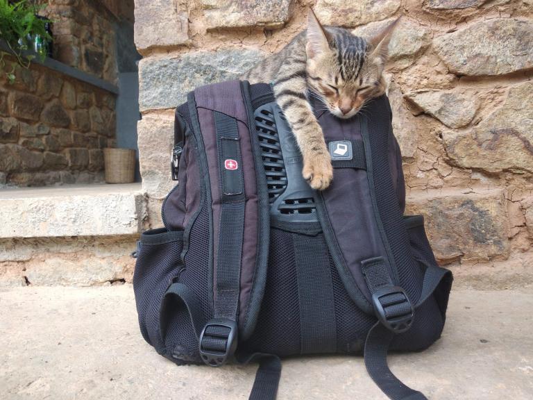 Cette photo a été prise quand nous revenons à Ella au retour de notre exploration de l'île pour dire au-revoir. Le chat s'est couché sur mon sac, c'est si mignon !