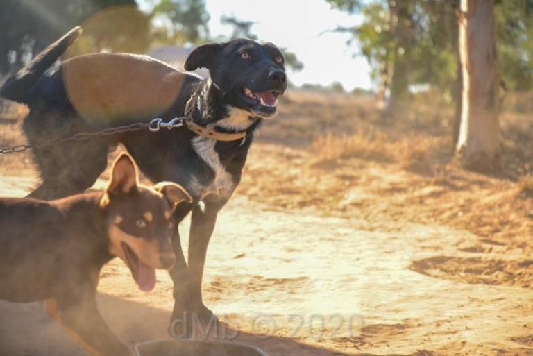 """Photo par Dante des """"chiens de travail"""" (dont Meg ♡)"""