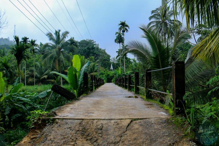 Pont à Sinharaja