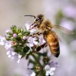 ハチミツはいつから赤ちゃんに食べさせていいの?1歳までの子供に食べさせてはいけない理由。