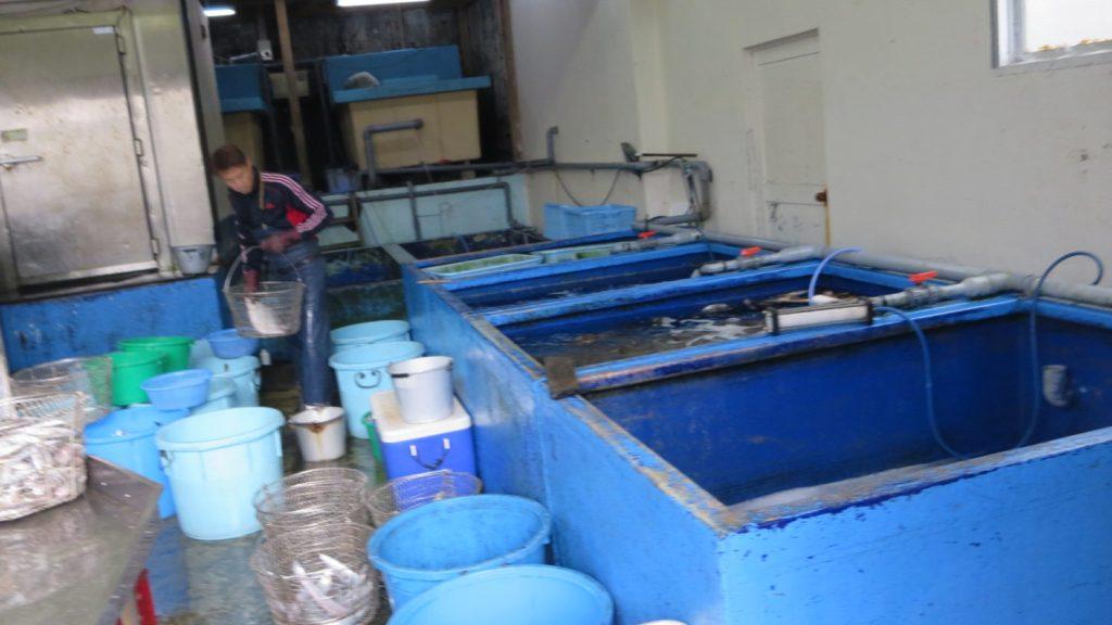 撮影用・生き物・調達・海洋生物・動物プロの仕事・生きた状態で輸送・バラエティー番組・海・酸素ボンベ・袋詰め・調査・リサーチ・聞き込み・コーデネート