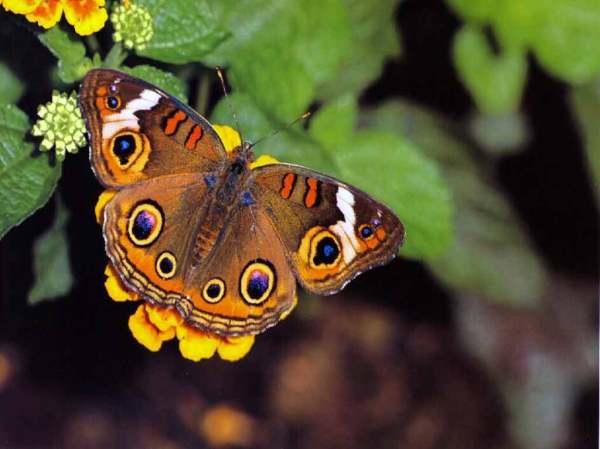 БАБОЧКИ.Фотографии красивых бабочек на Рабочий стол ...