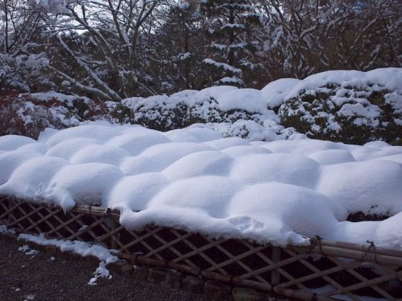 植え込みに雪が積もったみたいです