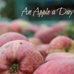 An Apple a Day – Apfelernte in Südtirol