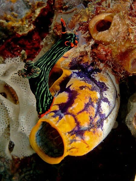 Picture 6 Of 8 Sea Squirt Urochordata Pictures