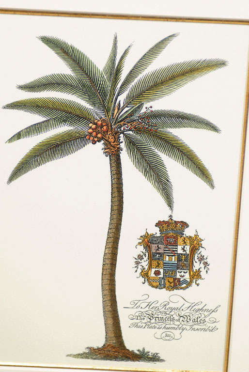 Set Of 4 Prints Of Palm Trees With Royal Inscriptions At