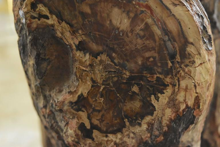 Early Fossilized Petrified Wood Stump From Madagascar