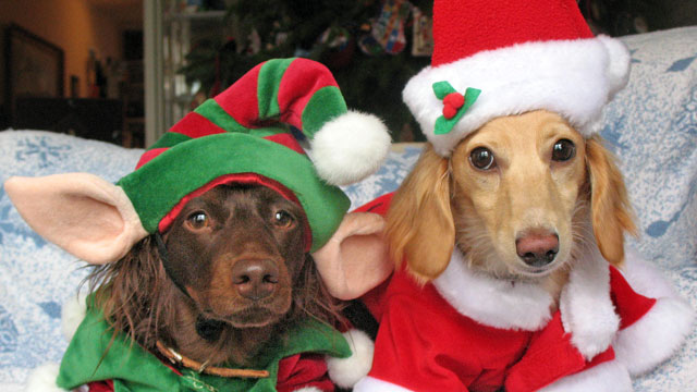 Gift Guide Holiday Gift Ideas For Dogs ABC News