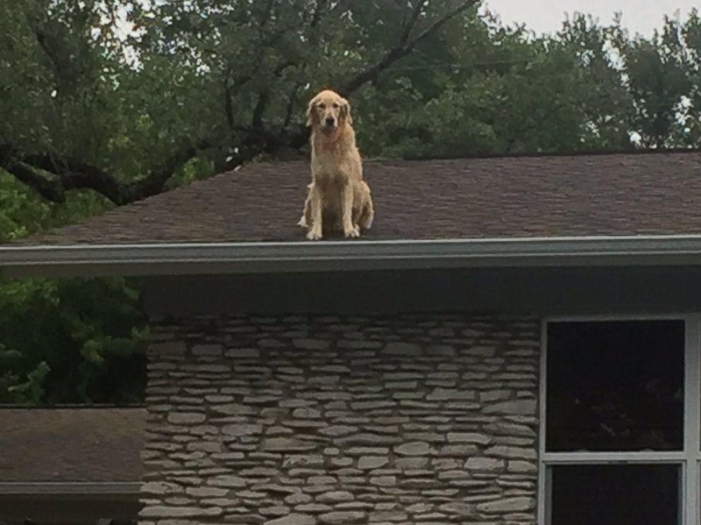 https://i1.wp.com/a.abcnews.com/images/Lifestyle/HT-huckleberry-dog-on-roof-1-jt-170511_4x3_992.jpg
