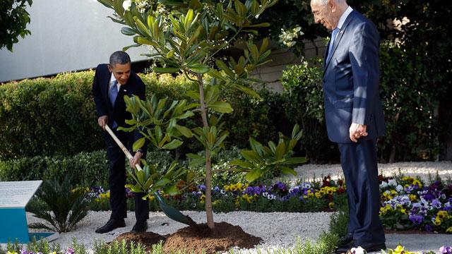 ap_obama_tree_planting_israel_thg_130321_wmain.jpg