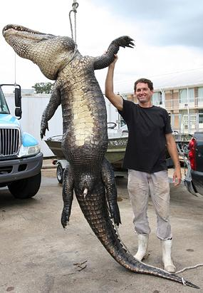 Fisherman Catches 12-foot Alligator