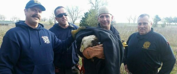 Kansas firefighters, sergeant help to rescue bald eagle ...