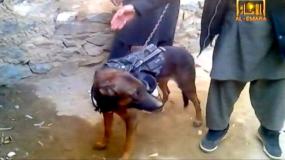 PHOTO: A military working dog was captured by the Taliban.