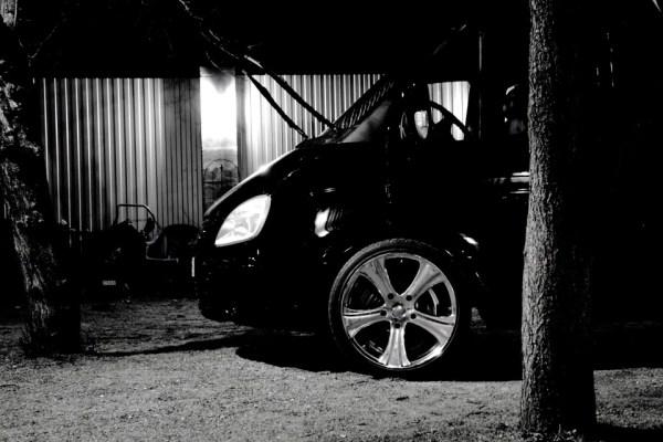 Black & Black. Фото дуба на фоне чёрного газона ...