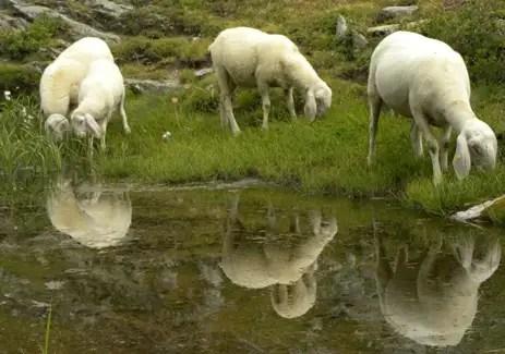 Avevo un compito storie di pascolo vagante for Recinto elettrico per capre