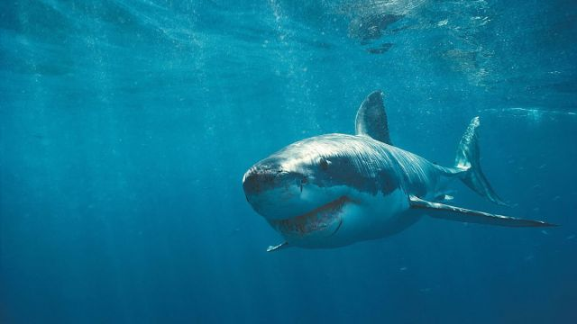 Shark Attack 3: Megalodon (2002) directed by David Worth • Reviews, film +  cast • Letterboxd