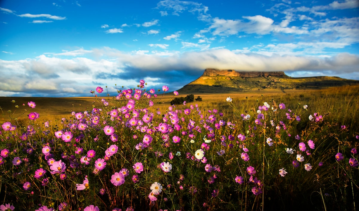 The GG mountain 'Bakerskop' on the reserve, available to climb. Cosmos flowers bloom in March.