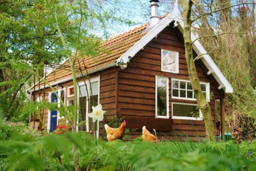 Gartenhaus-Hühner-Blumen