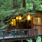 Redwood Treehouse Santa Cruz Mtns Treehouses For Rent In Watsonville California United States