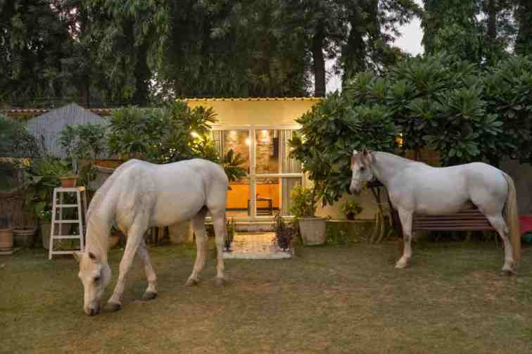 The Barn - A farm cottage by the horses - Farm stays for Rent in New Delhi,  Delhi, India