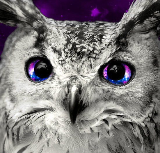 galaxy owl eyes art print