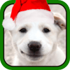 Hot Talking Booth Apps and More LLC - A Christmas Talking Puppy for iPad artwork