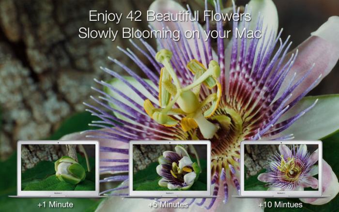 2_Magic_Flowers_-_Living_Wallpaper_Screen_Saver.jpg
