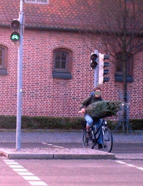 tannenbaum transport fahrrad