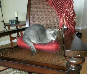 Stella on her silk pillow