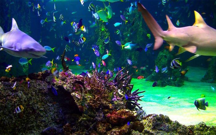4_Aquarium_Live_HD_ocean_screensaver.jpg