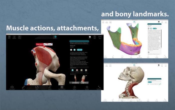 3_Human_Anatomy_Atlas_–_3D_Anatomical_Model_of_the_Human_Body.jpg