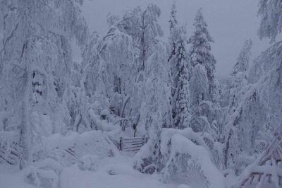 la Laponie par Virginie B