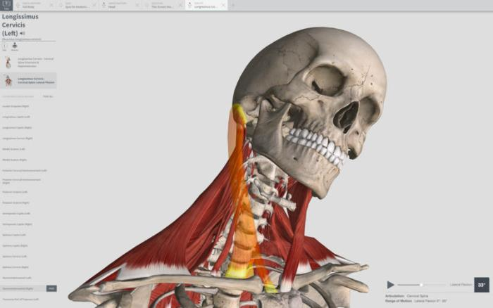 Complete Anatomy 2018 3 0 download free | Mac Torrent Download